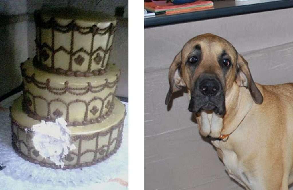 charlie & cake
