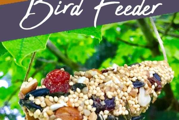 bird feeder made from an ice cream sugar cone